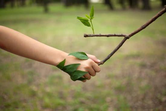 La naturaleza nos ayuda a tener armonía.