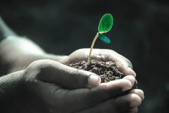 Las plantas son hijas de nuestra misma madre.