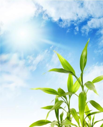 """Nuestro sol, con sus rayos, podríamos decir mágicos y energéticos, producen en las plantas el milagro bioquímico llamado """"fotosíntesis"""", elaborando la savia y la vida en todo el reino vegetal."""